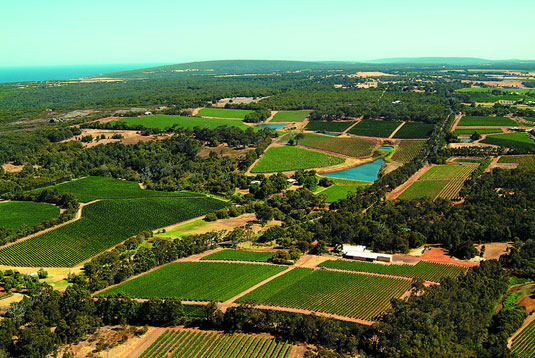 Aerial Vineyard Image
